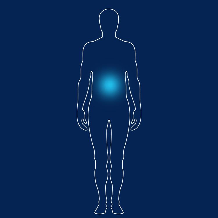 Erfreut Oberflächenanatomie Der Gallenblase Fotos - Anatomie Von ...